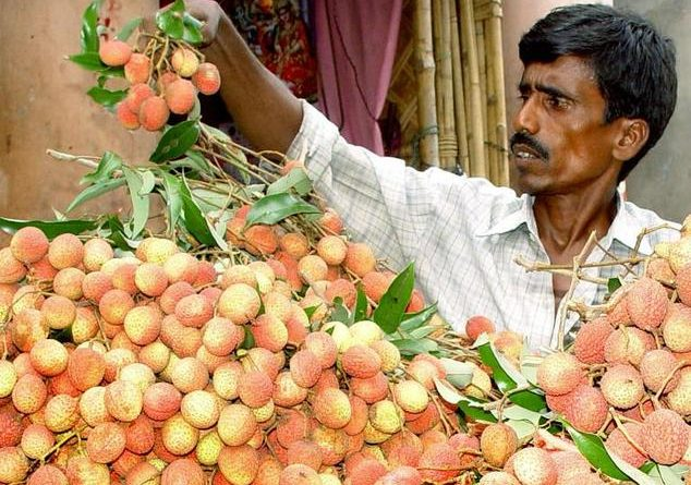 fruit uit india