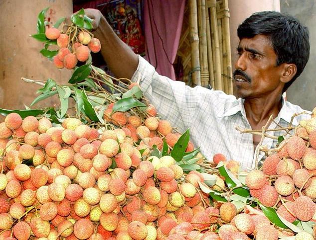 fruit uit india
